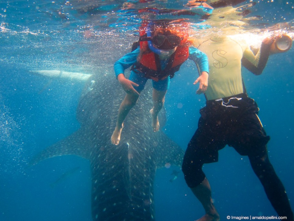 Venla swims with Whale Sharks between Cebu and Sumilon island